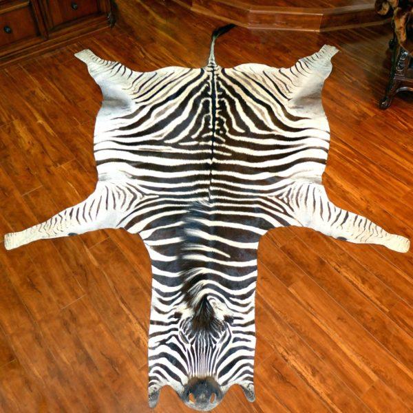 Authentic Trophy Grade Zebra